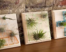Air Plants & String Art Workshop